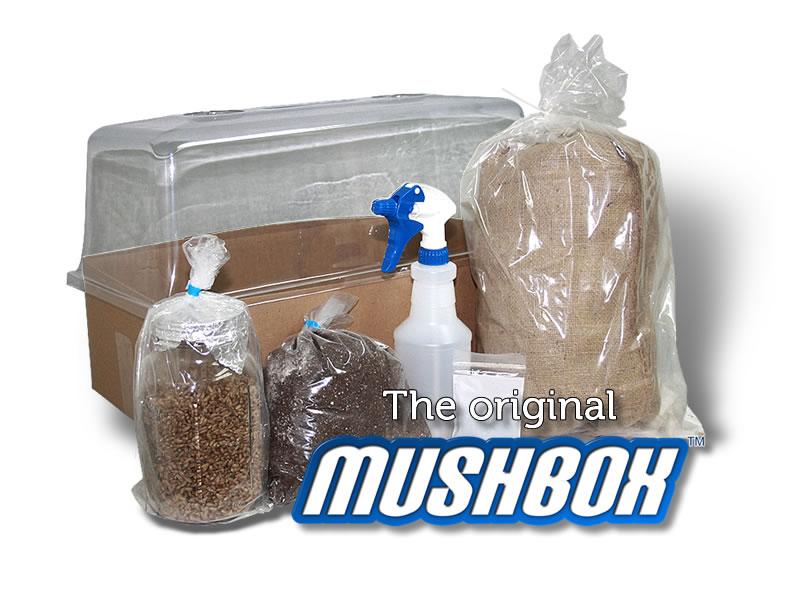 mushroom casing kit