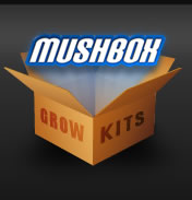Mushbox Mushroom Growing Kits