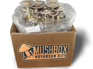 Mini Casing Kit - Live Mycelium