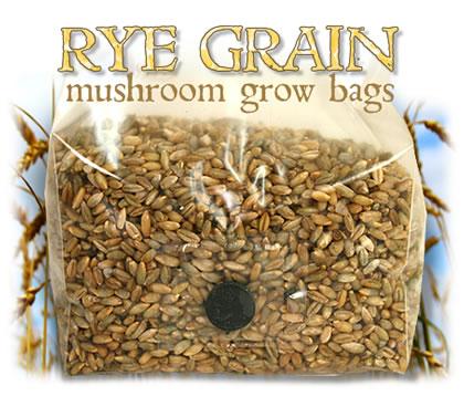 Rye grain bulk substrate
